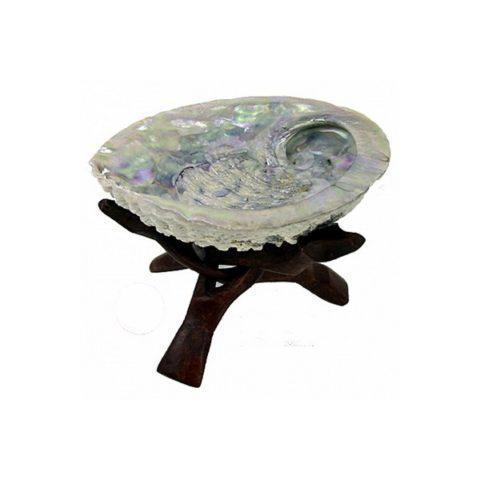 coquille-abalone-boutique esoterique l aurore celeste lille haubourdin